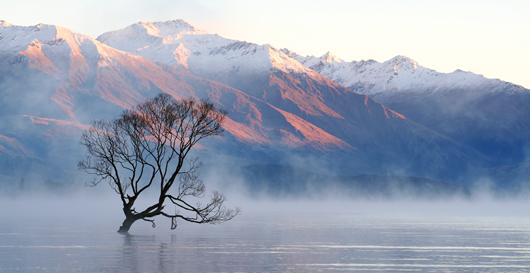 photo of lake wanaka tree